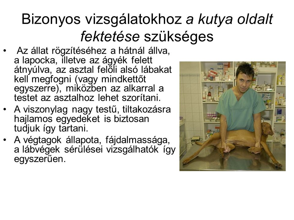 Bizonyos vizsgálatokhoz a kutya oldalt fektetése szükséges Az állat rögzítéséhez a hátnál állva, a lapocka, illetve az ágyék felett átnyúlva, az asztal felőli alsó lábakat kell megfogni (vagy mindkettőt egyszerre), miközben az alkarral a testet az asztalhoz lehet szorítani.