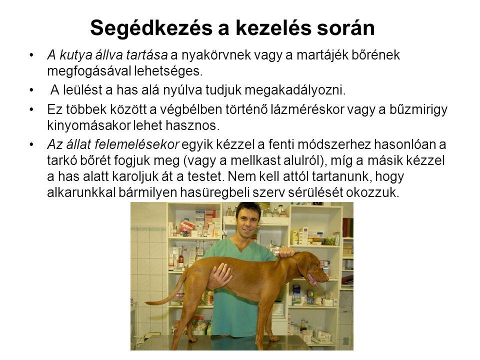 Segédkezés a kezelés során A kutya állva tartása a nyakörvnek vagy a martájék bőrének megfogásával lehetséges. A leülést a has alá nyúlva tudjuk megak