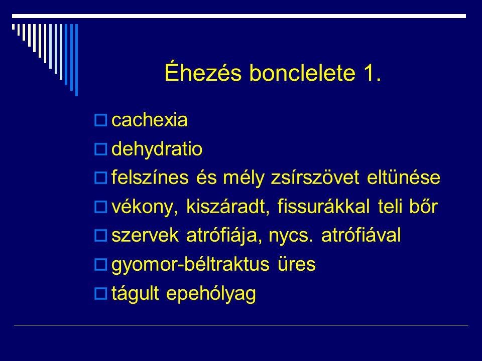 Éhezés bonclelete 1.  cachexia  dehydratio  felszínes és mély zsírszövet eltünése  vékony, kiszáradt, fissurákkal teli bőr  szervek atrófiája, ny