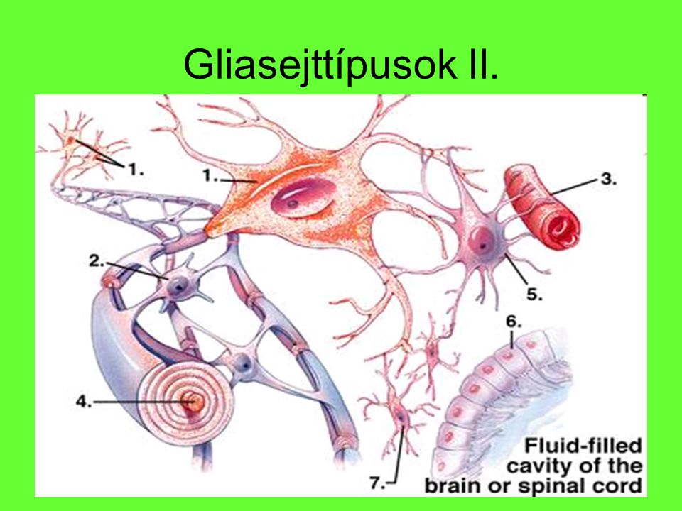 Gliasejttípusok II.