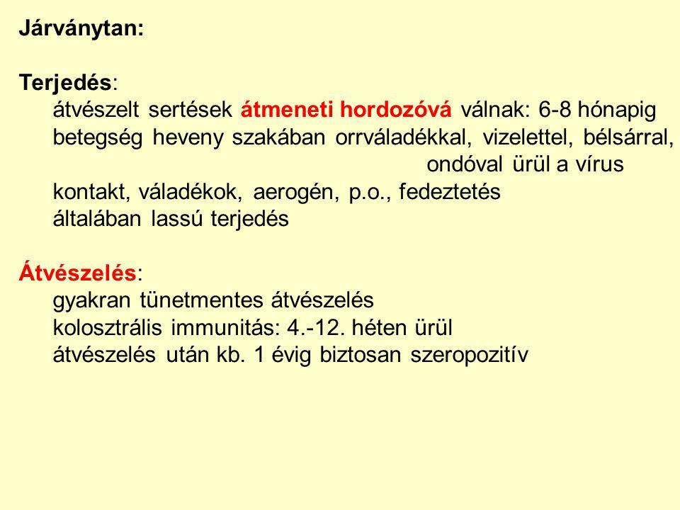 Kórfejlődés: tüdő → alveoláris makrofágok, endothelsejtek viraemia (24-48 óra) alveoláris macrophagok lysise, tüdő erek thrombosisa vírusszaporodás a keringő lymphocytákban → immunszuppresszió 2-14 napos viraemia vemhes koca – magzatkárosodás fertőződés után 3.-4.
