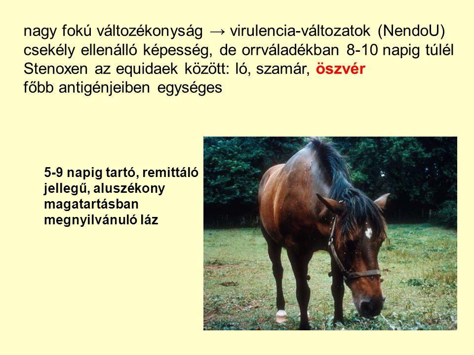 Járványtan: Terjedés: 1.aerogén, perorális,2.