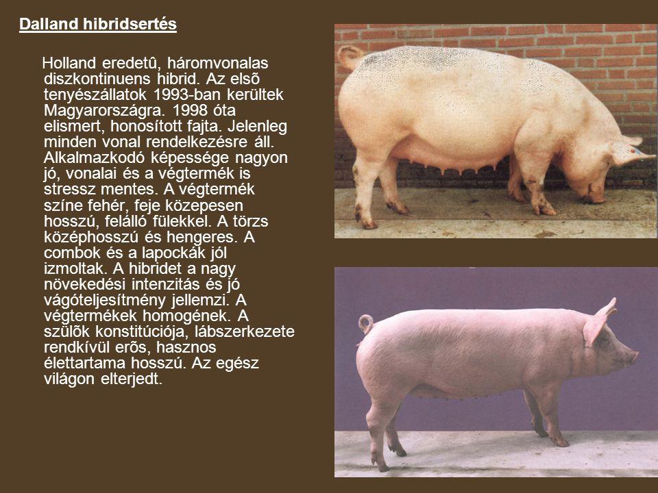 Dalland hibridsertés Holland eredetû, háromvonalas diszkontinuens hibrid. Az elsõ tenyészállatok 1993-ban kerültek Magyarországra. 1998 óta elismert,