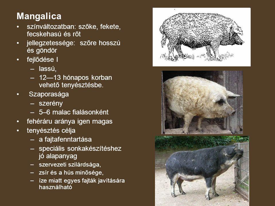 Magyar nagyfehér hússertés Legjelentõsebb hazai alapfajtánk, elsõsorban keresztezésekben és a hibridizációban az árutermelés anyai bázisát biztosítja.
