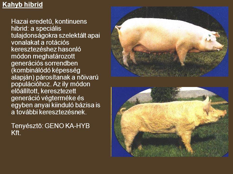 Kahyb hibrid Hazai eredetû, kontinuens hibrid: a speciális tulajdonságokra szelektált apai vonalakat a rotációs keresztezéshez hasonló módon meghatározott generációs sorrendben (kombinálódó képesség alapján) párosítanak a nõivarú populációhoz.