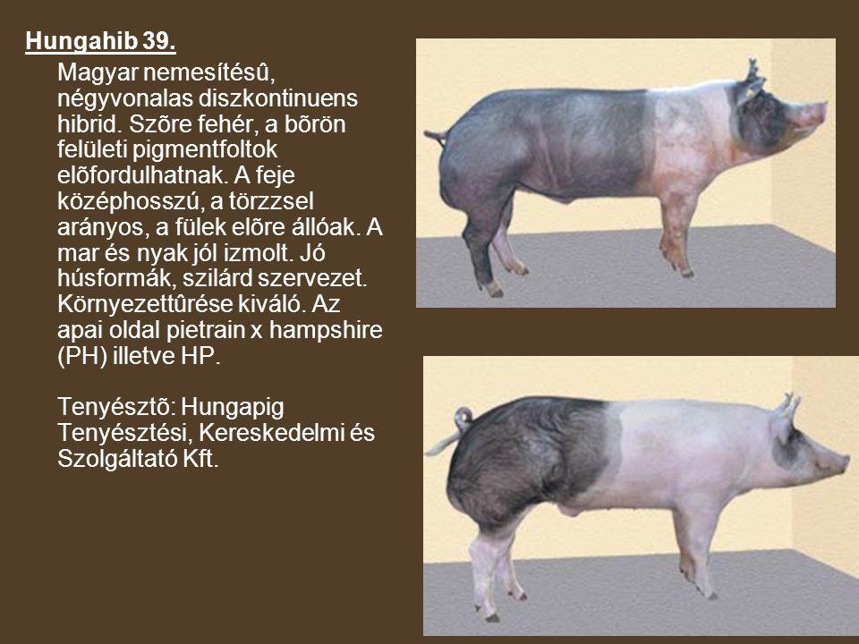 Hungahib 39.Magyar nemesítésû, négyvonalas diszkontinuens hibrid.