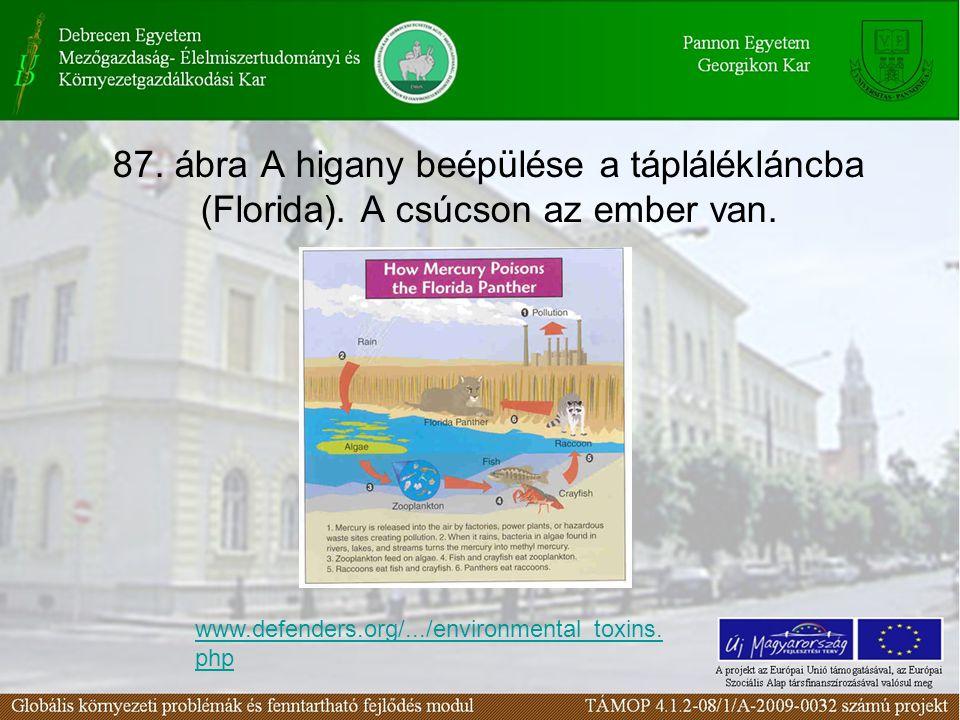 87. ábra A higany beépülése a táplálékláncba (Florida). A csúcson az ember van. www.defenders.org/.../environmental_toxins. php