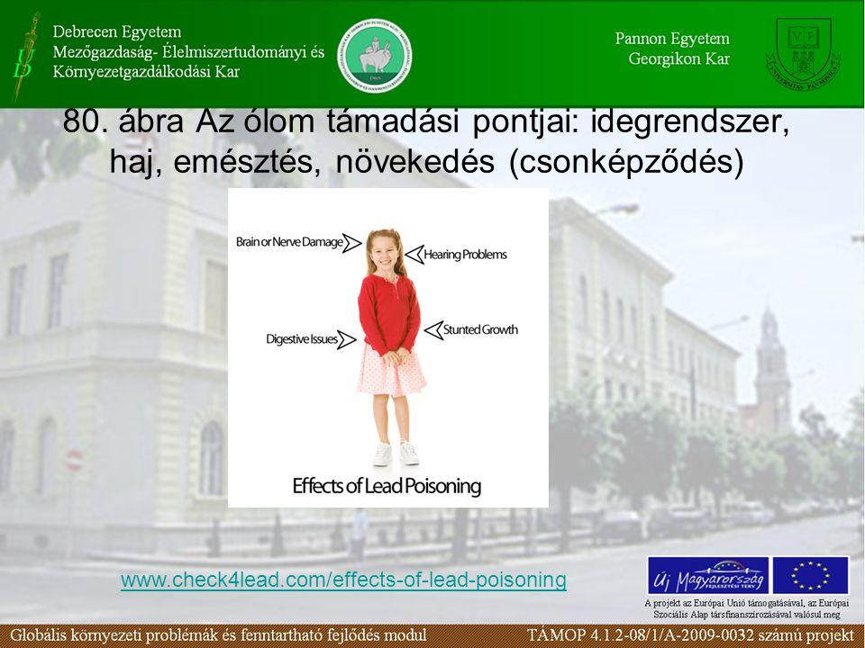 80. ábra Az ólom támadási pontjai: idegrendszer, haj, emésztés, növekedés (csonképződés) www.check4lead.com/effects-of-lead-poisoning