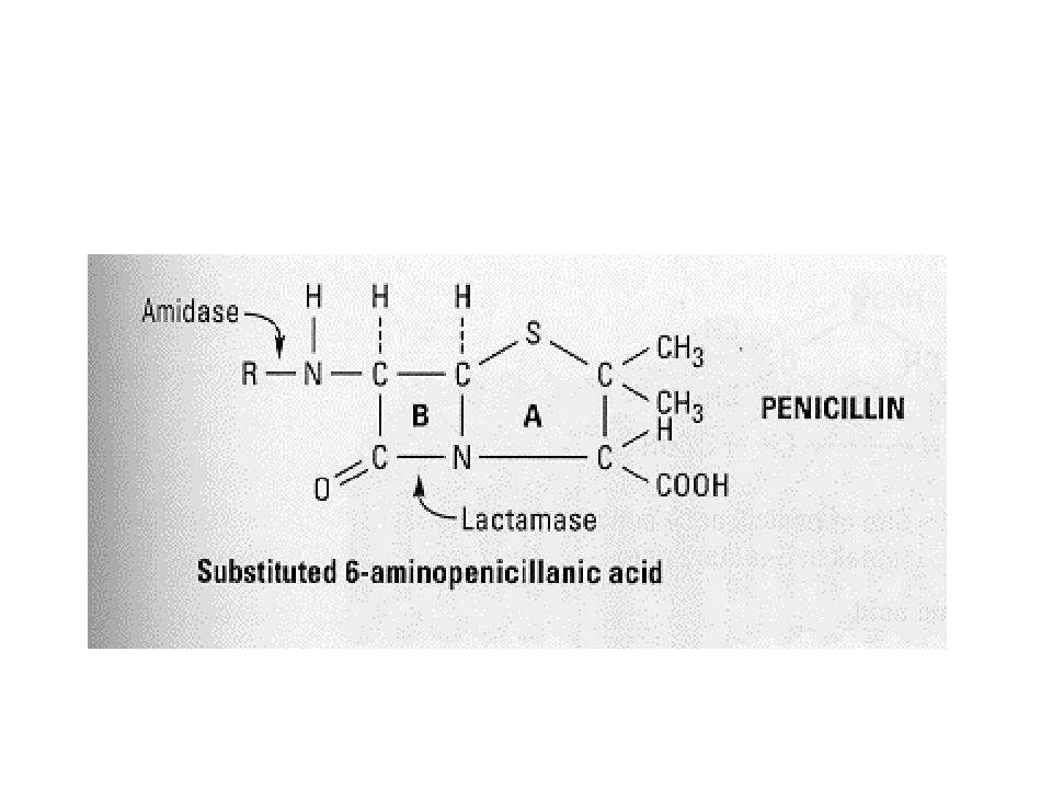 Penicillinek G-penicillin az alapvegyületGram(+) coccusok hatásspektrum szélesítés:  amino-  ureido-penicillinek  karboxi- β-laktamáz gátlóval kombinálva  klavulánsav  sulbactam  tazobactam