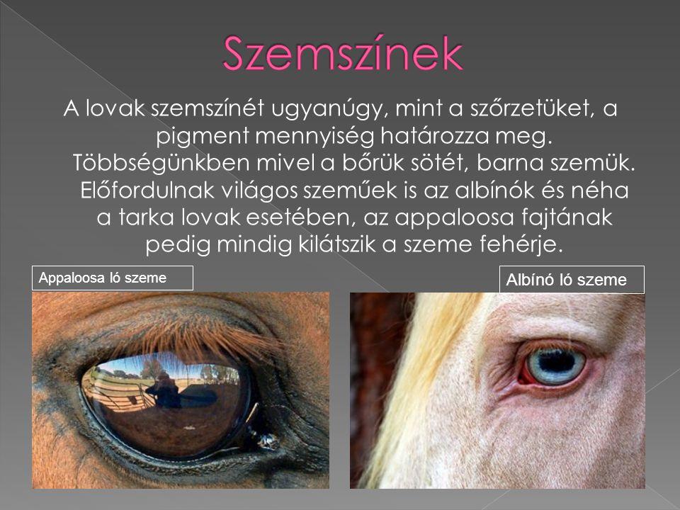 A lovak szemszínét ugyanúgy, mint a szőrzetüket, a pigment mennyiség határozza meg. Többségünkben mivel a bőrük sötét, barna szemük. Előfordulnak vilá