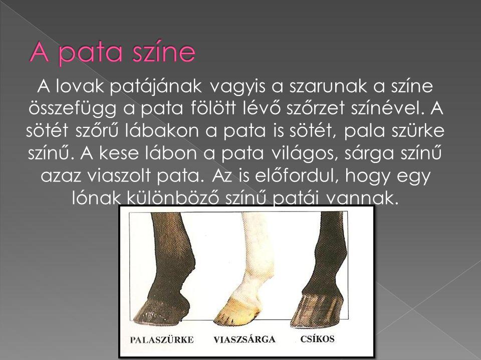 A lovak patájának vagyis a szarunak a színe összefügg a pata fölött lévő szőrzet színével. A sötét szőrű lábakon a pata is sötét, pala szürke színű. A