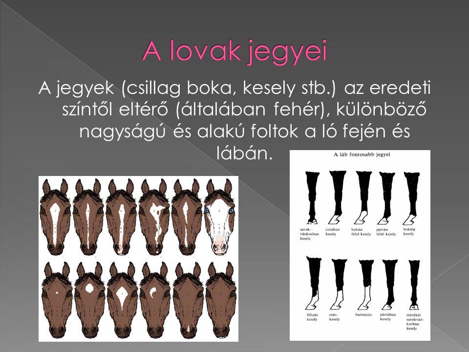 A jegyek (csillag boka, kesely stb.) az eredeti színtől eltérő (általában fehér), különböző nagyságú és alakú foltok a ló fején és lábán.