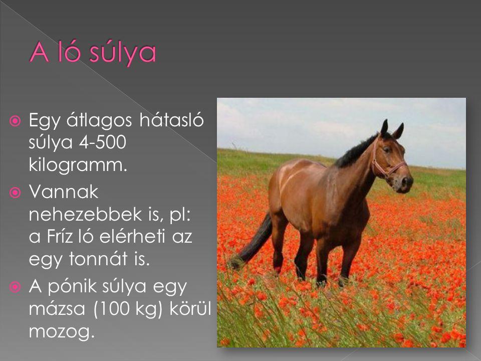  Egy átlagos hátasló súlya 4-500 kilogramm.  Vannak nehezebbek is, pl: a Fríz ló elérheti az egy tonnát is.  A pónik súlya egy mázsa (100 kg) körül