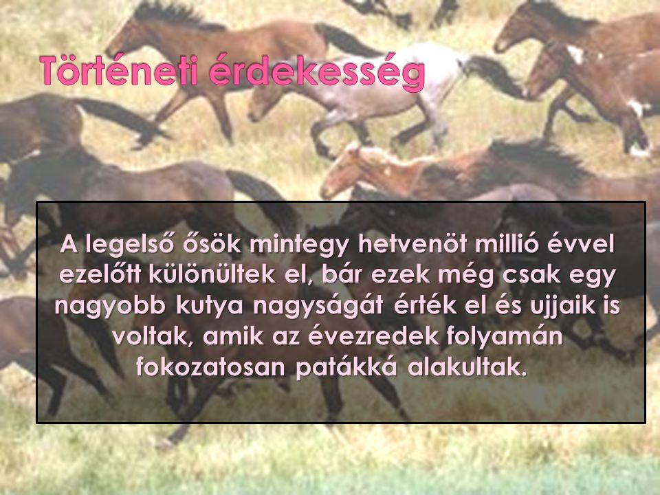 A legelső ősök mintegy hetvenöt millió évvel ezelőtt különültek el, bár ezek még csak egy nagyobb kutya nagyságát érték el és ujjaik is voltak, amik a