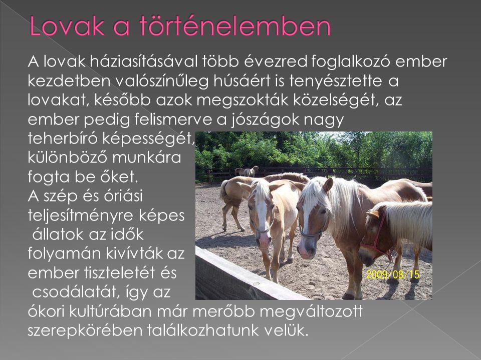 A lovak háziasításával több évezred foglalkozó ember kezdetben valószínűleg húsáért is tenyésztette a lovakat, később azok megszokták közelségét, az e