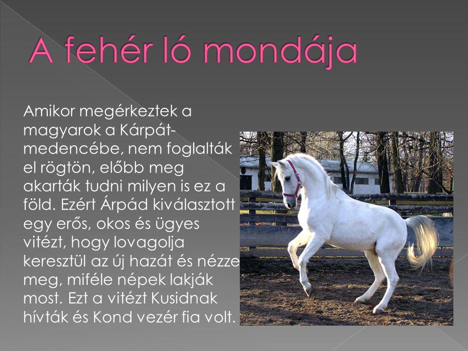  a ló fejének oldalnézete Egyenes fej: a ló feje oldalról egyenes.