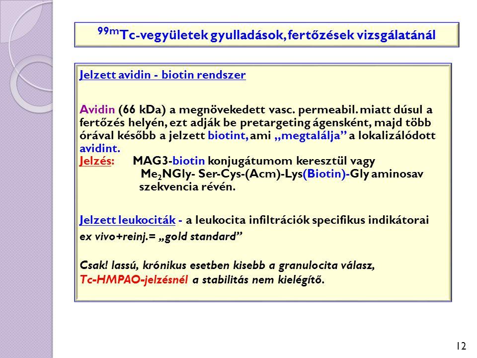 12 Jelzett avidin - biotin rendszer Avidin (66 kDa) a megnövekedett vasc. permeabil. miatt dúsul a fertőzés helyén, ezt adják be pretargeting ágenskén