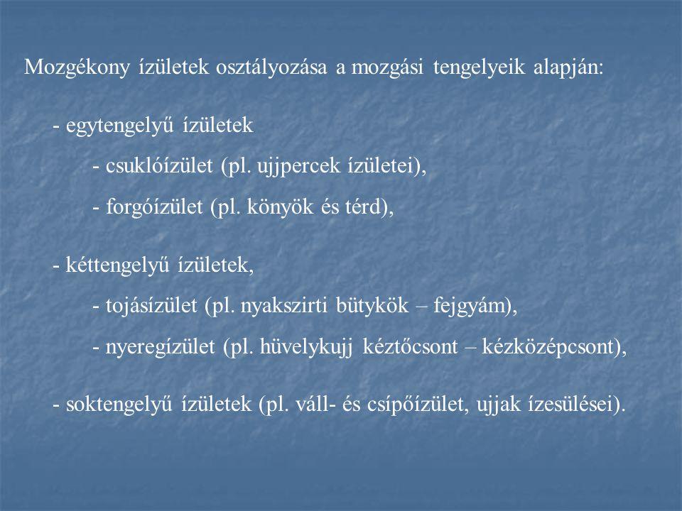 Mozgékony ízületek osztályozása a mozgási tengelyeik alapján: - egytengelyű ízületek - csuklóízület (pl. ujjpercek ízületei), - forgóízület (pl. könyö