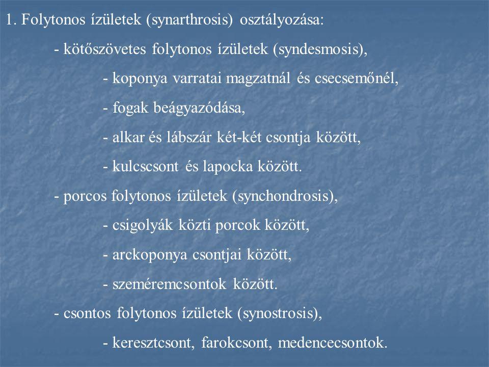1. Folytonos ízületek (synarthrosis) osztályozása: - kötőszövetes folytonos ízületek (syndesmosis), - koponya varratai magzatnál és csecsemőnél, - fog