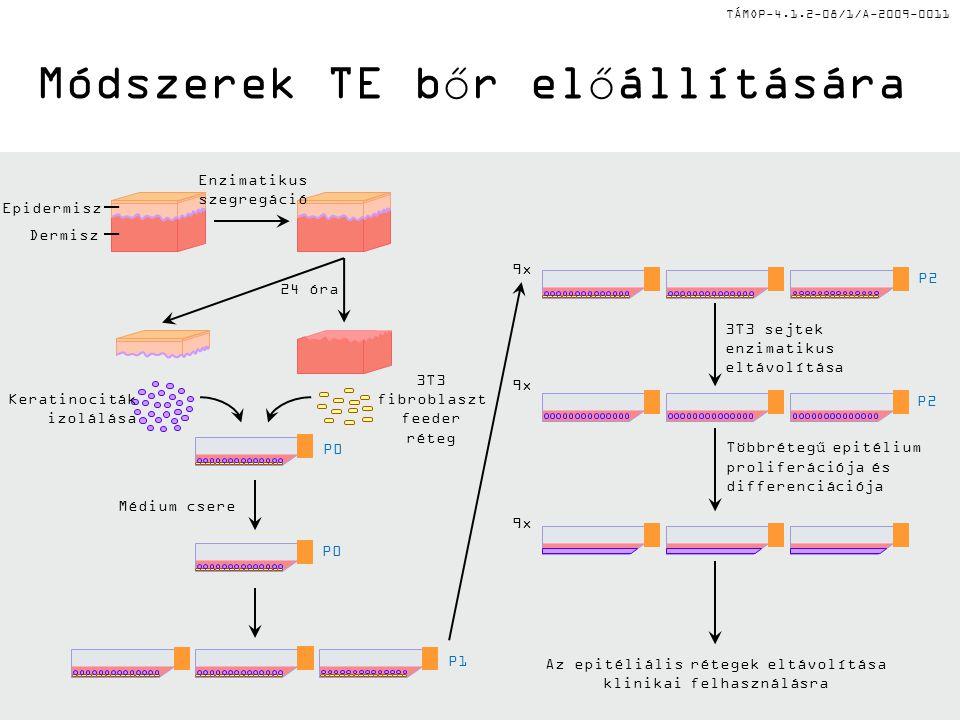 TÁMOP-4.1.2-08/1/A-2009-0011 Módszerek TE bőr előállítására Az epitéliális rétegek eltávolítása klinikai felhasználásra 9x 3T3 sejtek enzimatikus eltávolítása Többrétegű epitélium proliferációja és differenciációja 9x P2 Médium csere P0 P1 Dermisz Epidermisz Keratinociták izolálása 3T3 fibroblaszt feeder réteg Enzimatikus szegregáció 24 óra