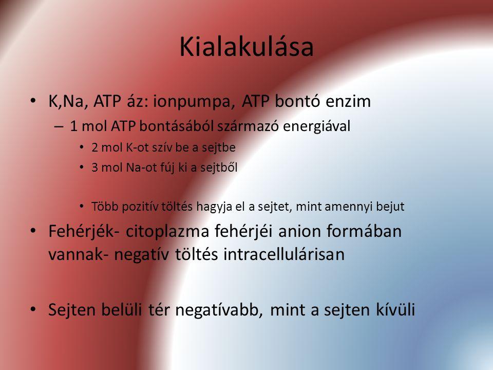Kialakulása K,Na, ATP áz: ionpumpa, ATP bontó enzim – 1 mol ATP bontásából származó energiával 2 mol K-ot szív be a sejtbe 3 mol Na-ot fúj ki a sejtbő