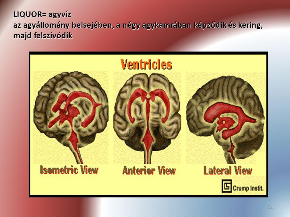 51 LIQUOR= agyvíz az agyállomány belsejében, a négy agykamrában képződik és kering, majd felszívódik