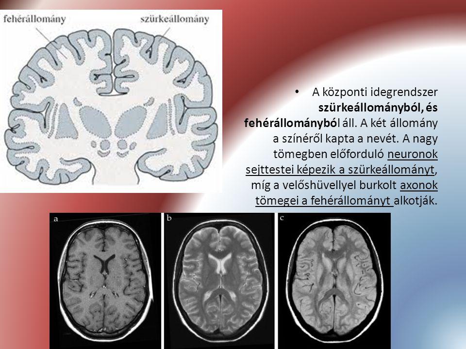 A központi idegrendszer szürkeállományból, és fehérállományból áll. A két állomány a színéről kapta a nevét. A nagy tömegben előforduló neuronok sejtt