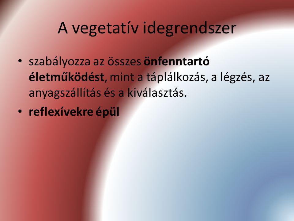 A vegetatív idegrendszer szabályozza az összes önfenntartó életműködést, mint a táplálkozás, a légzés, az anyagszállítás és a kiválasztás. reflexívekr