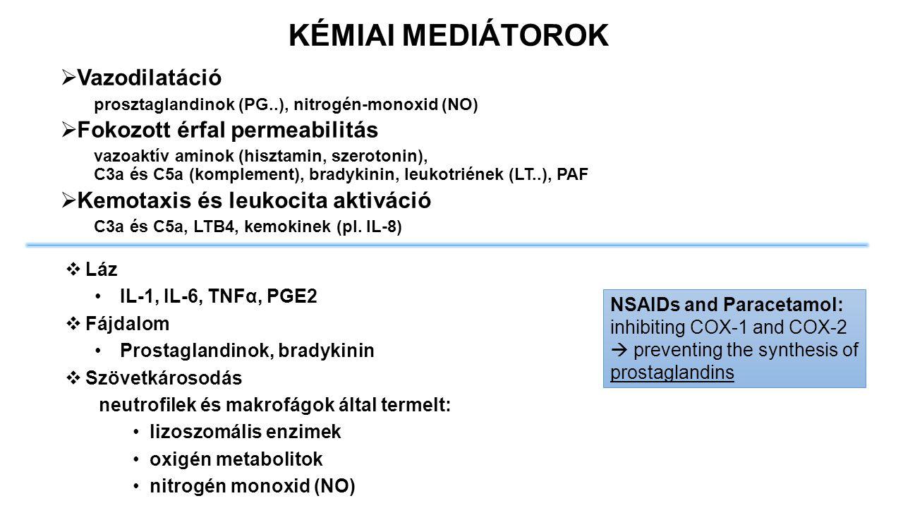  Vazodilatáció prosztaglandinok (PG..), nitrogén-monoxid (NO)  Fokozott érfal permeabilitás vazoaktív aminok (hisztamin, szerotonin), C3a és C5a (ko