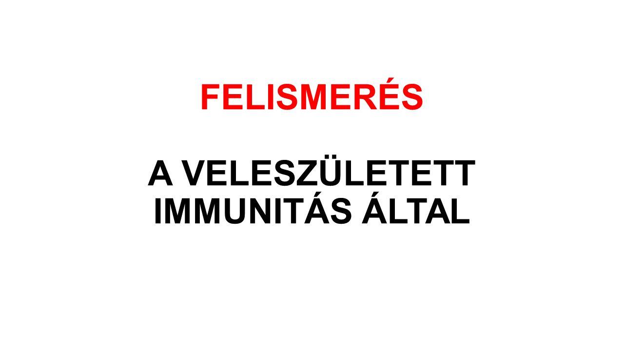 FELISMERÉS A VELESZÜLETETT IMMUNITÁS ÁLTAL