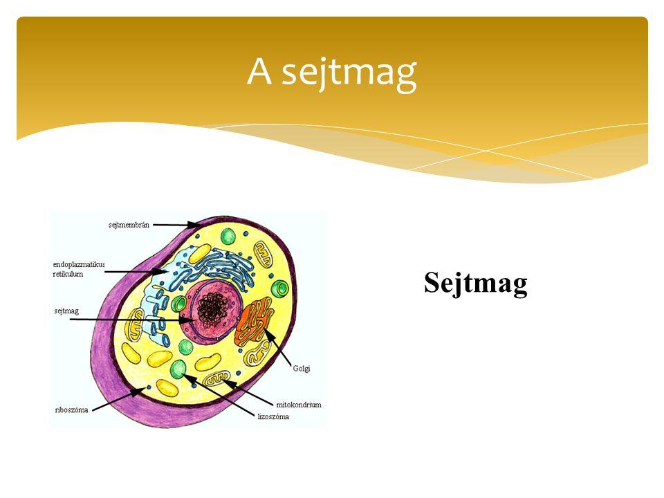 A hasonló alakú és azonos működésű sejtek összességét szöveteknek nevezzük.