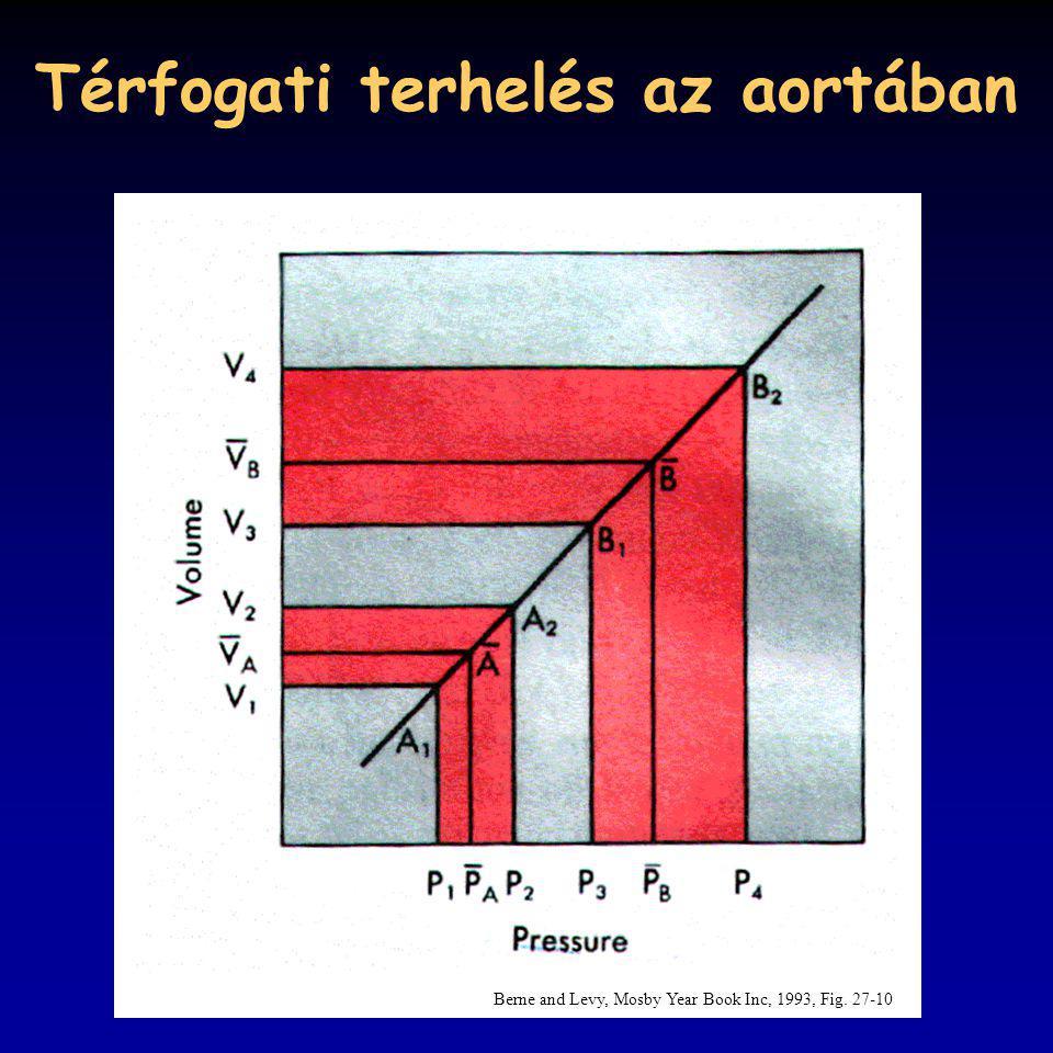 Térfogati terhelés az aortában Berne and Levy, Mosby Year Book Inc, 1993, Fig. 27-10