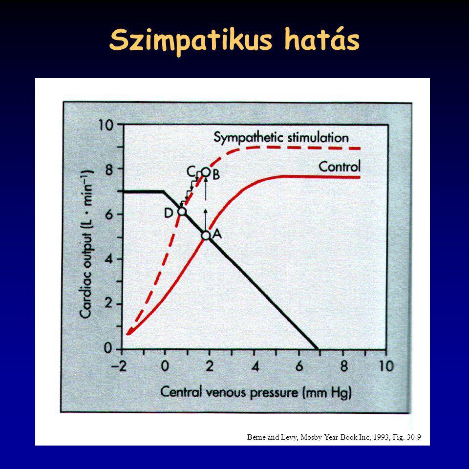 Szimpatikus hatás Berne and Levy, Mosby Year Book Inc, 1993, Fig. 30-9