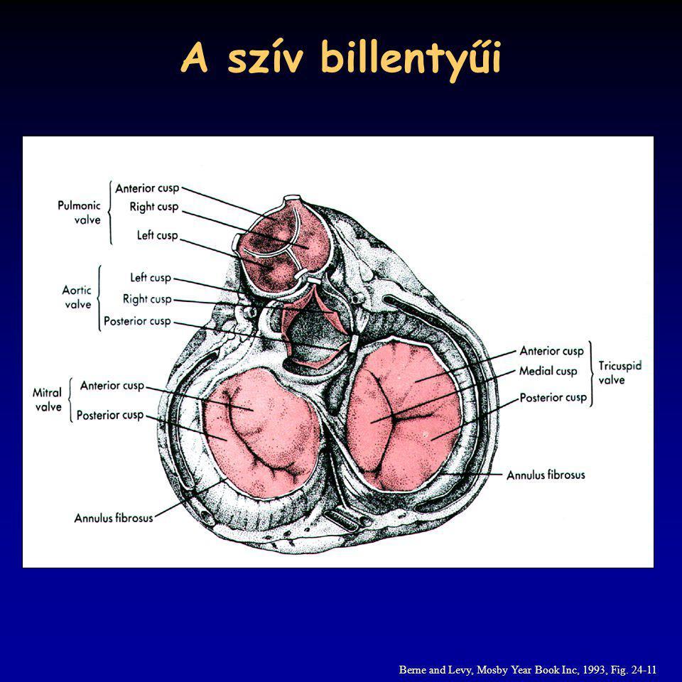 A szív billentyűi Berne and Levy, Mosby Year Book Inc, 1993, Fig. 24-11