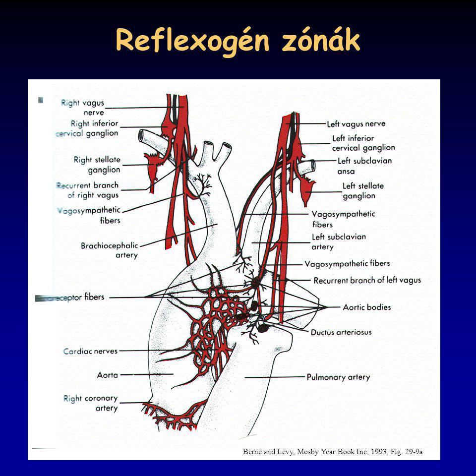 Reflexogén zónák Berne and Levy, Mosby Year Book Inc, 1993, Fig. 29-9a