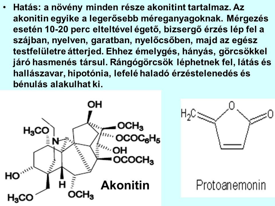 Hatás: a növény minden része akonitint tartalmaz.Az akonitin egyike a legerősebb méreganyagoknak.