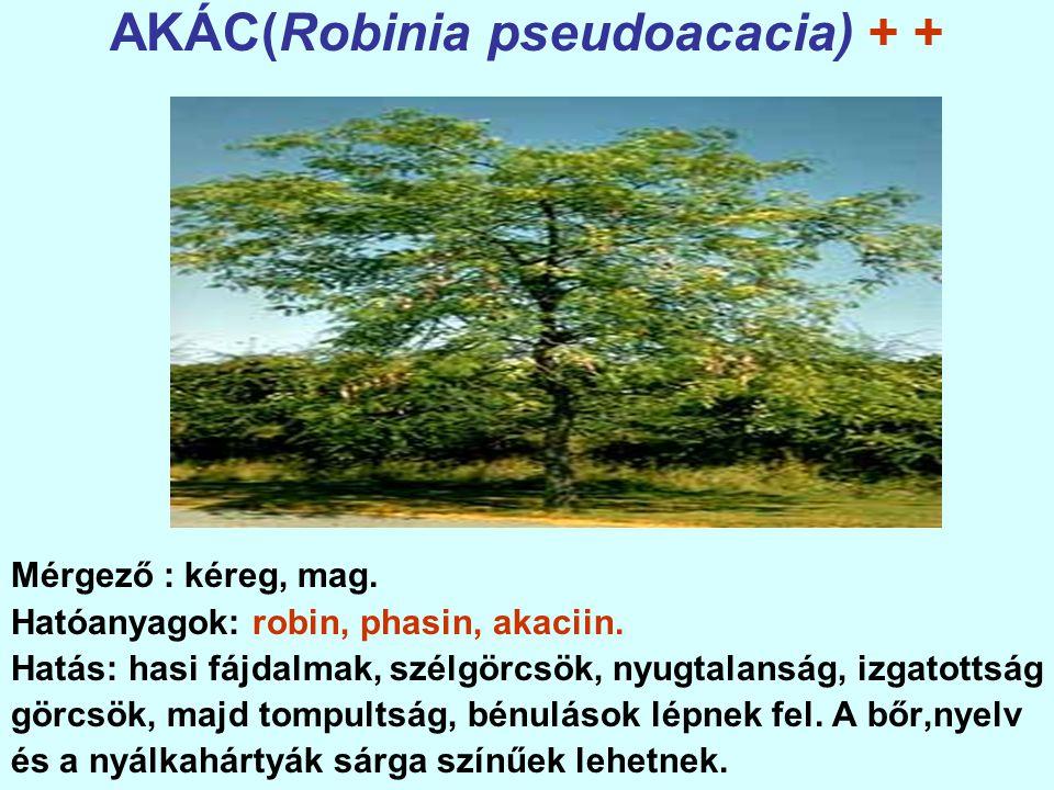 RICINUS(Ricinus communis) + + + + Mérgező: a növény minden része. Hatóanyagok: ricin, ricinin.