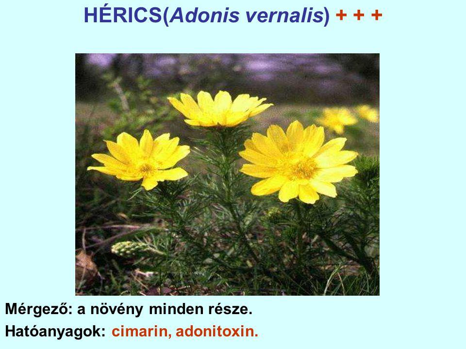 HÉRICS(Adonis vernalis) + + + Mérgező: a növény minden része. Hatóanyagok: cimarin, adonitoxin.