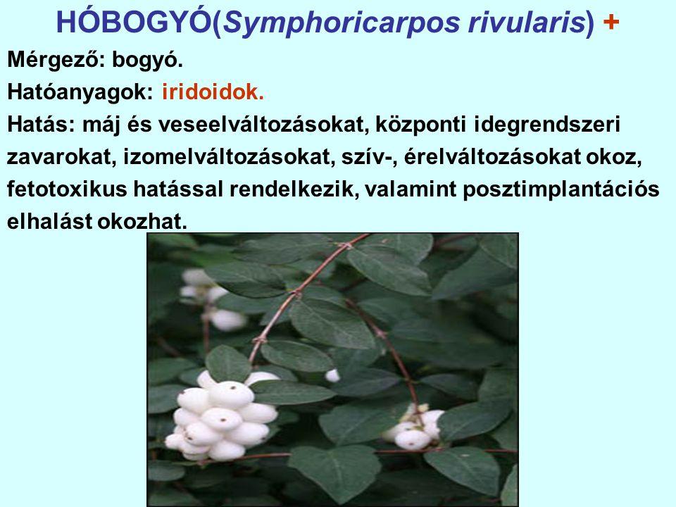 HÓBOGYÓ(Symphoricarpos rivularis) + Mérgező: bogyó.