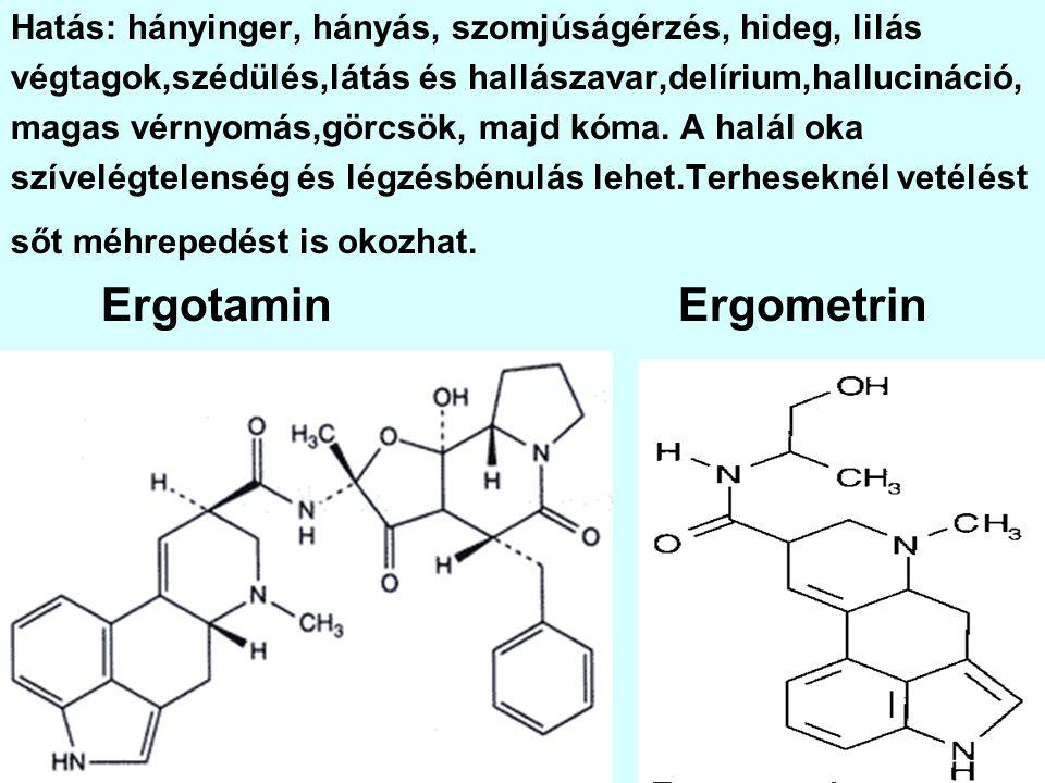 VADGESZTENYE(Aesculus hippocastanum) + Mérgező: termés. Hatóanyagok: eszcin, eszkulin.