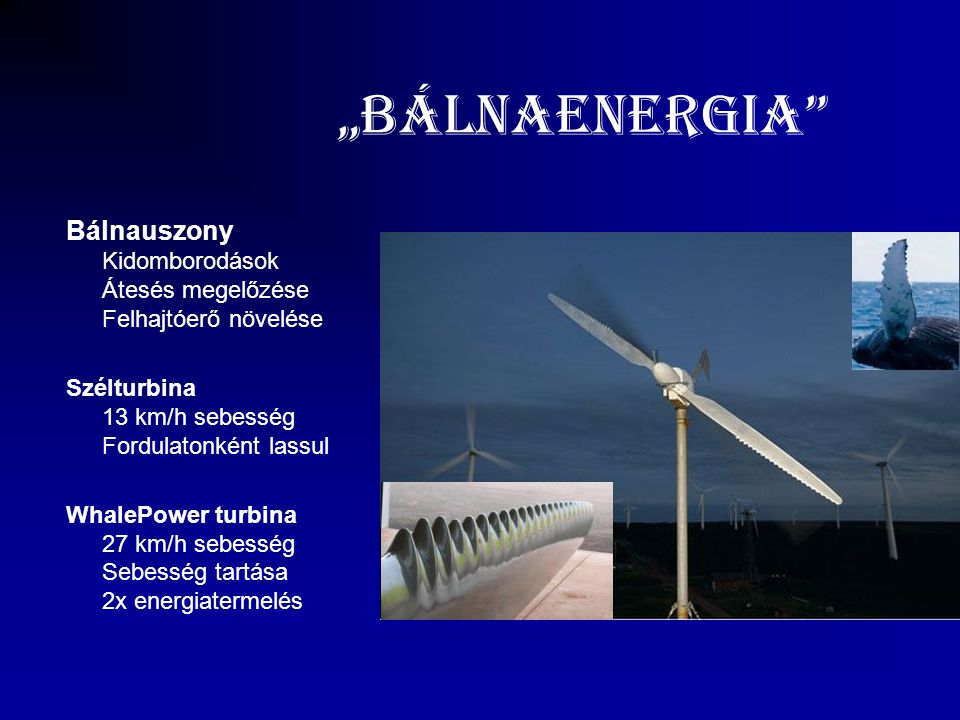 """""""BálnaEnergia"""" Bálnauszony Kidomborodások Átesés megelőzése Felhajtóerő növelése Szélturbina 13 km/h sebesség Fordulatonként lassul WhalePower turbina"""