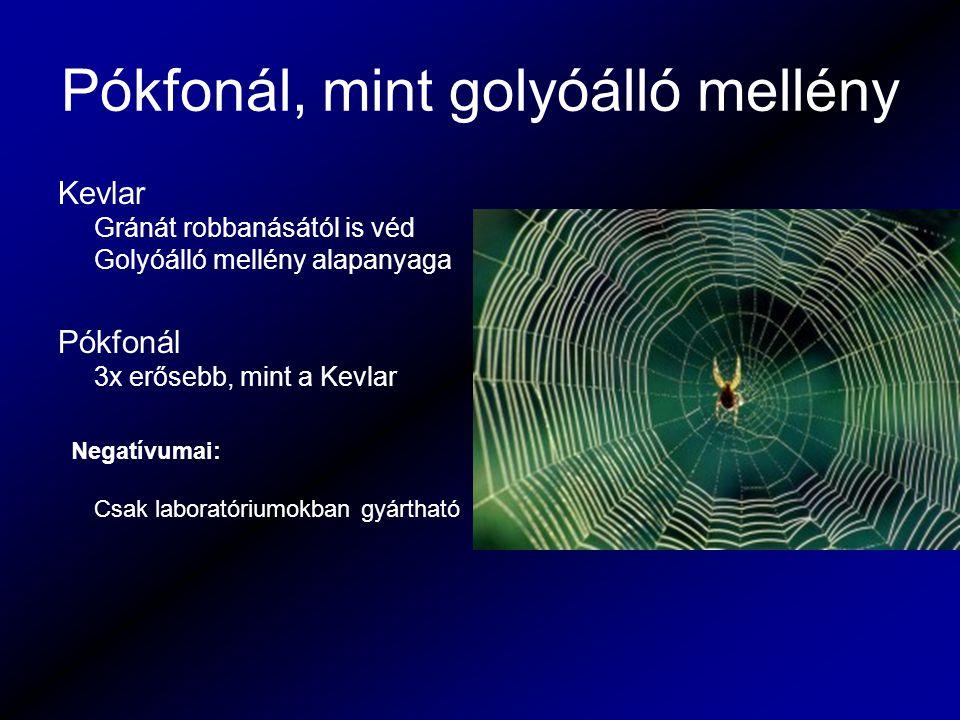 Pókfonál, mint golyóálló mellény Kevlar Gránát robbanásától is véd Golyóálló mellény alapanyaga Pókfonál 3x erősebb, mint a Kevlar Negatívumai: Csak l