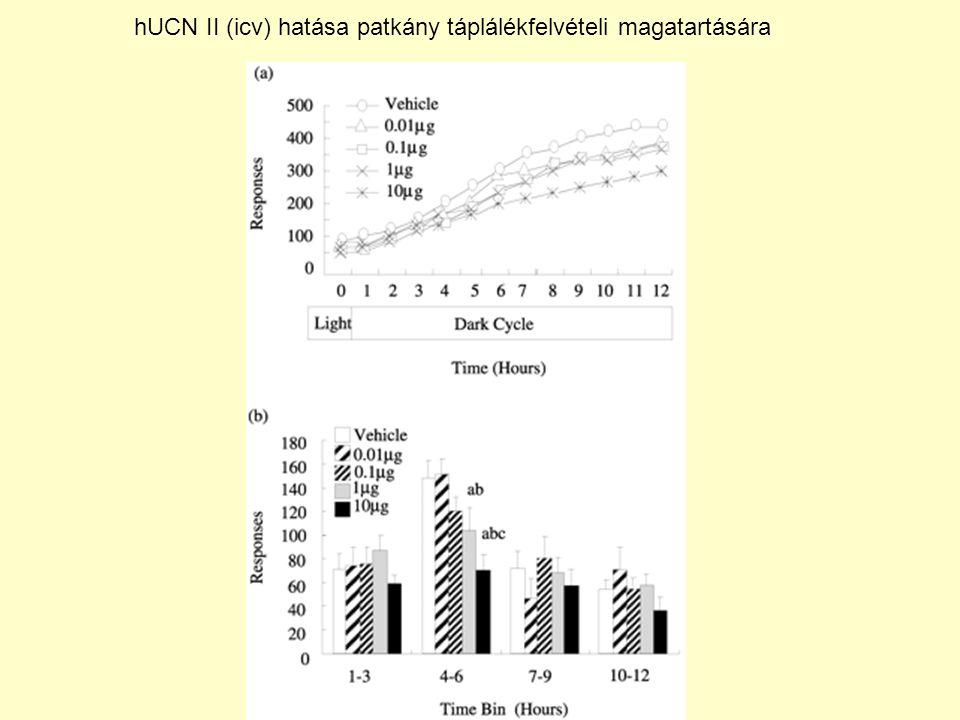 hUCN II (icv) hatása patkány táplálékfelvételi magatartására