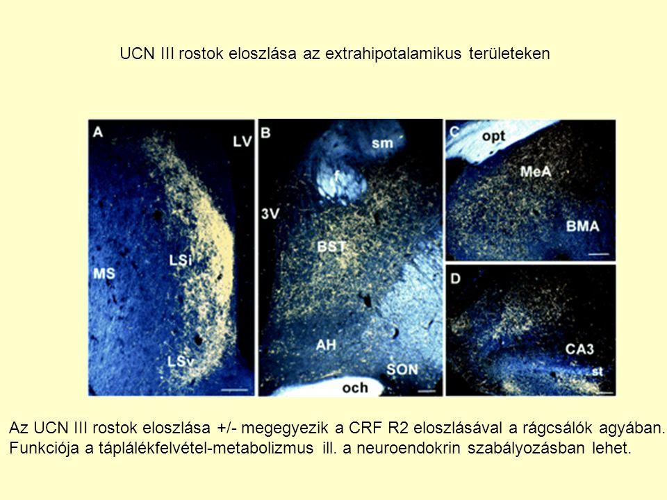 UCN III rostok eloszlása az extrahipotalamikus területeken Az UCN III rostok eloszlása +/- megegyezik a CRF R2 eloszlásával a rágcsálók agyában. Funkc