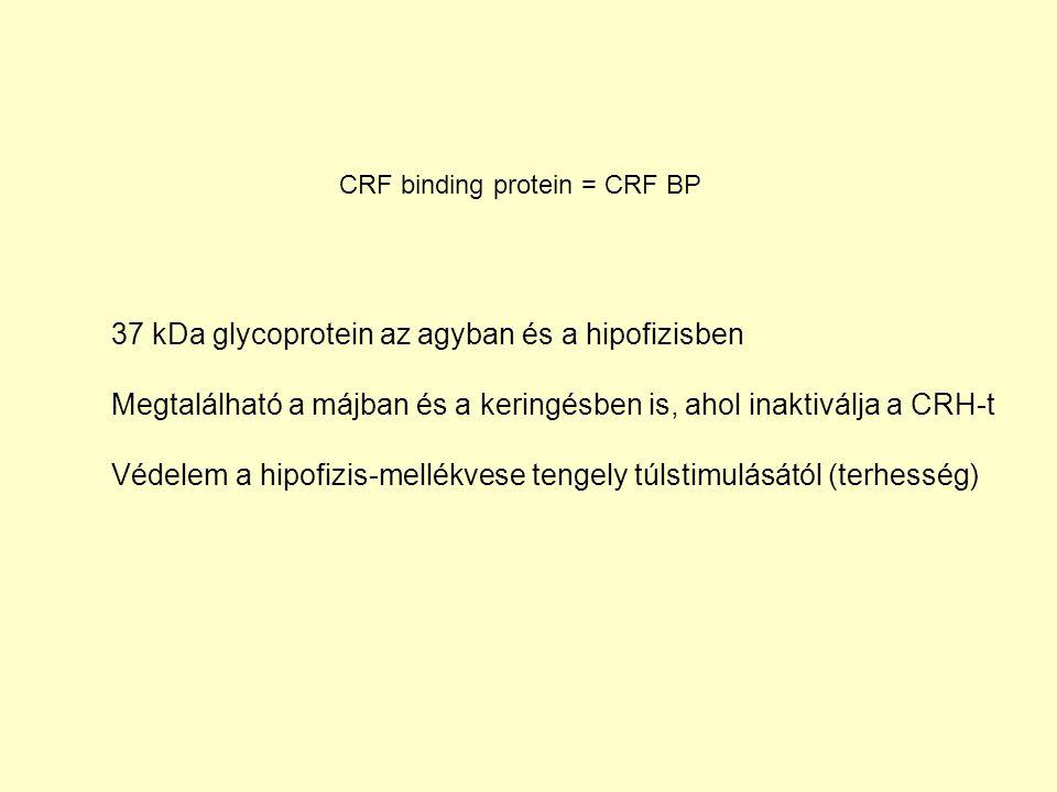 CRF binding protein = CRF BP 37 kDa glycoprotein az agyban és a hipofizisben Megtalálható a májban és a keringésben is, ahol inaktiválja a CRH-t Védelem a hipofizis-mellékvese tengely túlstimulásától (terhesség)