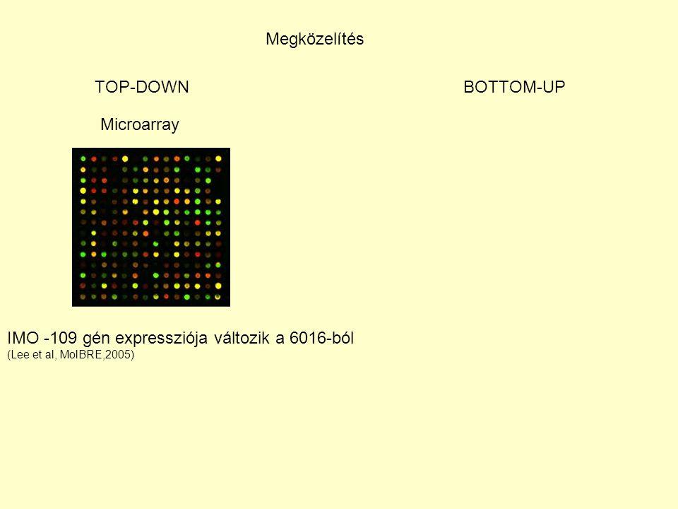 Megközelítés TOP-DOWNBOTTOM-UP Microarray IMO -109 gén expressziója változik a 6016-ból (Lee et al, MolBRE,2005)