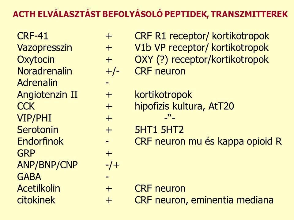 ACTH ELVÁLASZTÁST BEFOLYÁSOLÓ PEPTIDEK, TRANSZMITTEREK CRF-41+CRF R1 receptor/ kortikotropok Vazopresszin+V1b VP receptor/ kortikotropok Oxytocin+OXY (?) receptor/kortikotropok Noradrenalin+/-CRF neuron Adrenalin- Angiotenzin II+kortikotropok CCK+hipofizis kultura, AtT20 VIP/PHI+- - Serotonin+5HT1 5HT2 Endorfinok-CRF neuron mu és kappa opioid R GRP+ ANP/BNP/CNP-/+ GABA- Acetilkolin+CRF neuron citokinek+CRF neuron, eminentia mediana