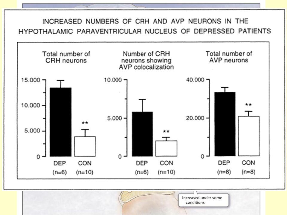 5. Stresszel-kapcsolatos neuropeptidek- neuropszichiátriai betegségek Major depresszió: Emelkedett HPA aktivitás, emelkedett cortisol szekréció, nincs
