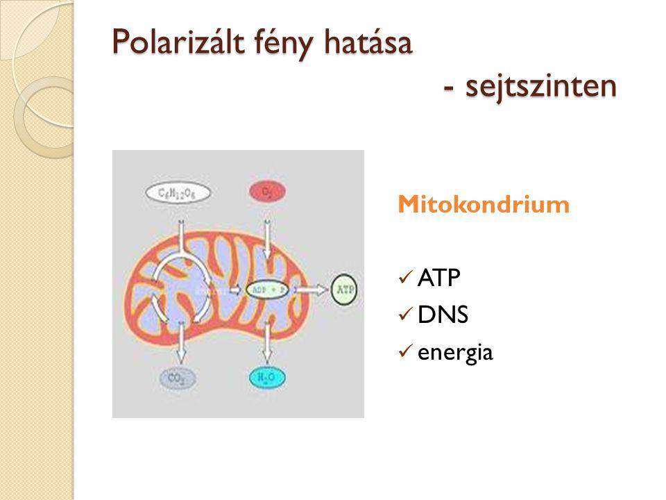 Polarizált fény hatása - sejtszinten Mitokondrium ATP DNS energia