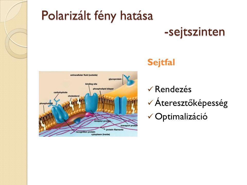Polarizált fény hatása -sejtszinten Sejtfal Rendezés Áteresztőképesség Optimalizáció